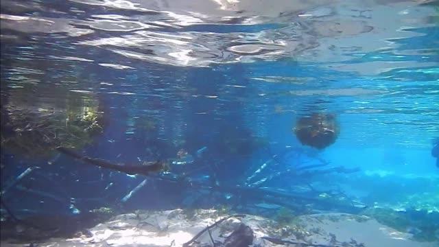 diving underwater of a river - ekoturystyka filmów i materiałów b-roll