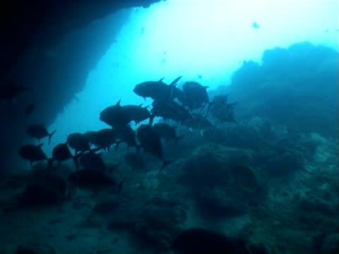 diving unterwasser video - indochina stock-videos und b-roll-filmmaterial