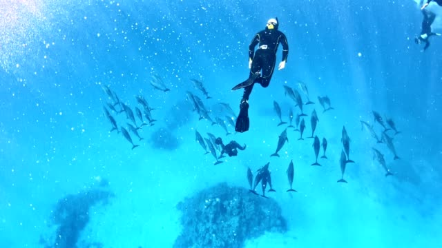 Diving with dolphins. Underwater scenery Swimming in deep, turquoise sea. Divers admiring dolphin family hard coral stock videos & royalty-free footage