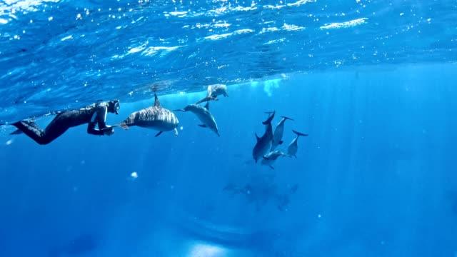 tauchen mit delfinen. unterwasserlandschaft - sprung wassersport stock-videos und b-roll-filmmaterial
