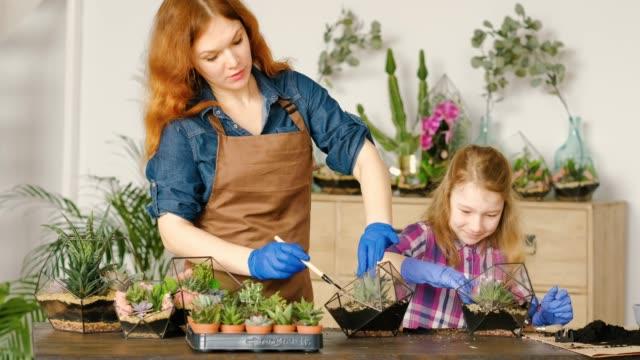vídeos de stock e filmes b-roll de diy florarium family business hobby florist shop - bricolage