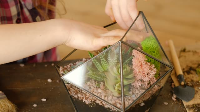 diy florarium hobby club handmade floral design DIY florarium. Modern kids hobby club. Handmade floral design. Girl using moss to complete succulent arrangement in glass vase. flower pot stock videos & royalty-free footage