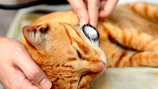 医師調べる猫 ビデオ