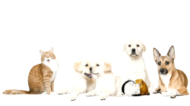 dog and cat and rodents