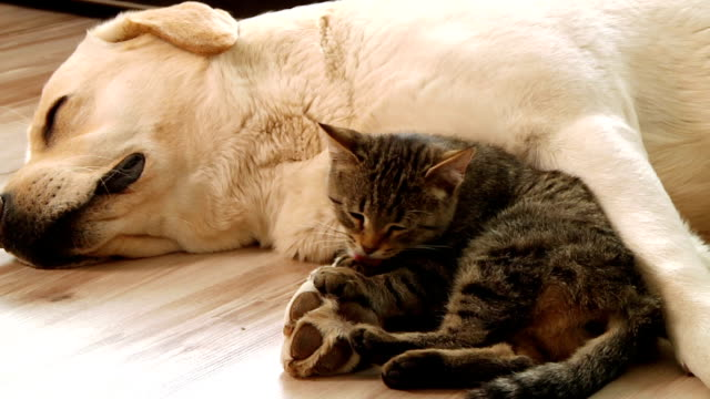 dog and cat video