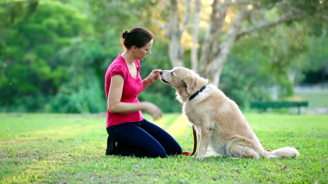 Dog and his female owner in the park doing shake video