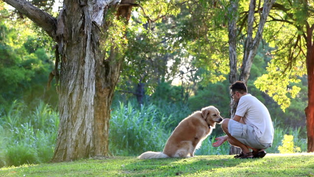 Dog and his owner in the park doing shake video