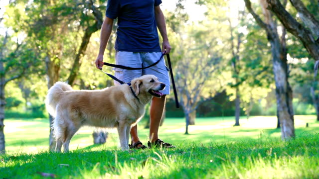 Dog and his owner walking in the park video