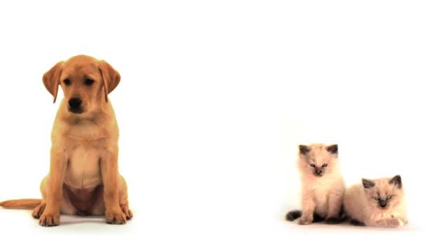hd - dog and kittens - 20 sekunder eller längre bildbanksvideor och videomaterial från bakom kulisserna