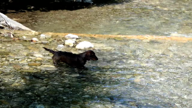 dog and mountain river video