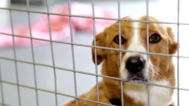 hund im zwinger - käfig stock-videos und b-roll-filmmaterial