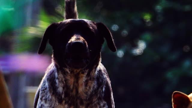 dog barking video