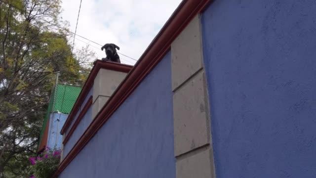 hund skäller från taket - nightsky bildbanksvideor och videomaterial från bakom kulisserna