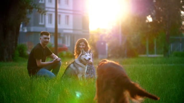 Dog breed irish setter running to young couple having a rest on the grass at summer sunset Dog breed irish setter running to young couple having a rest on the grass at summer sunset, slow motion setter dog stock videos & royalty-free footage