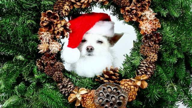 Dog Christmas Wreath video