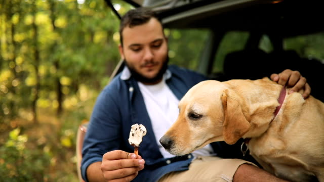 dog eat, biting and licking ice cream - leccare video stock e b–roll