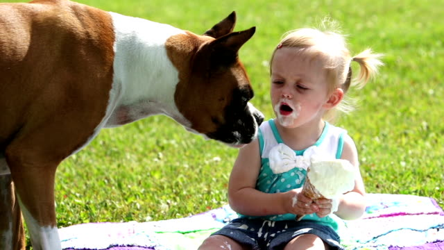 Dog eats ice cream Boxer dog eats little girls ice cream cone and then the little girl continues to have her cone.  This beautiful toddler displays the beauty of innocence. ice cream stock videos & royalty-free footage