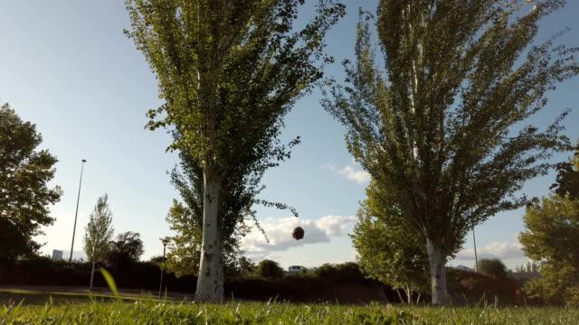 Dog Enjoying Playing Ball