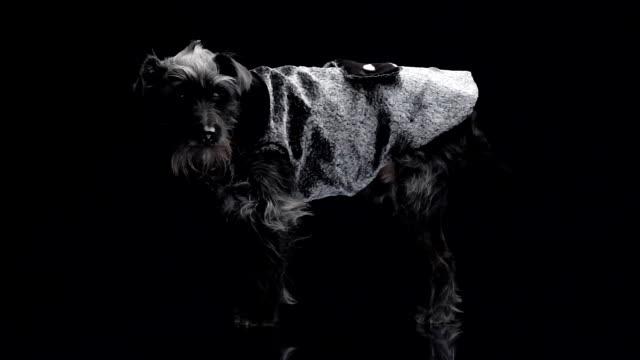 dog fashion video