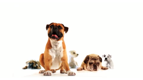 vídeos y material grabado en eventos de stock de grupo de perros - un animal