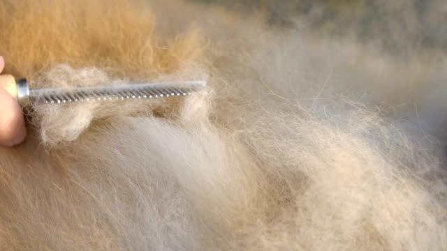 CU - Dog Hair Brushing Close Up Shot - Dog Hair Brushing fur stock videos & royalty-free footage