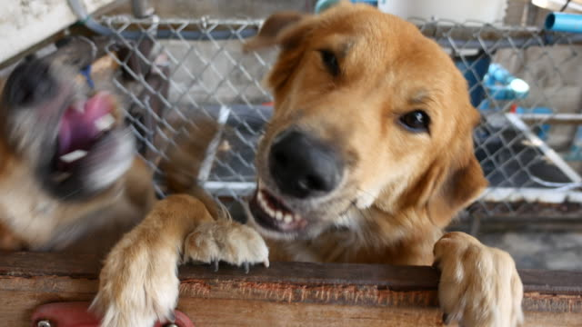 Dog happy Dog happy panting stock videos & royalty-free footage
