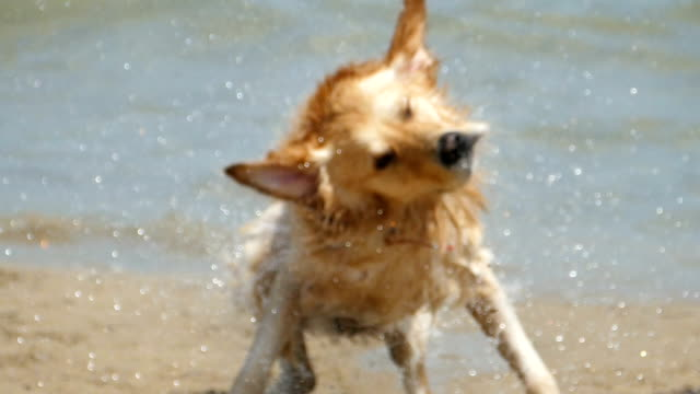 Dog having fun on beach video