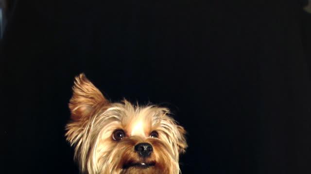 vídeos y material grabado en eventos de stock de perro cabeza - animal joven