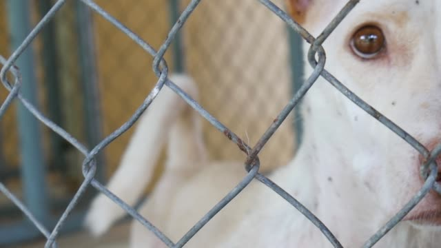 A dog in a cage in a dog nursery or shelter A dog in a cage in a dog nursery or shelter homeless shelter stock videos & royalty-free footage