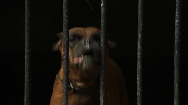 hund in einem käfig - käfig stock-videos und b-roll-filmmaterial