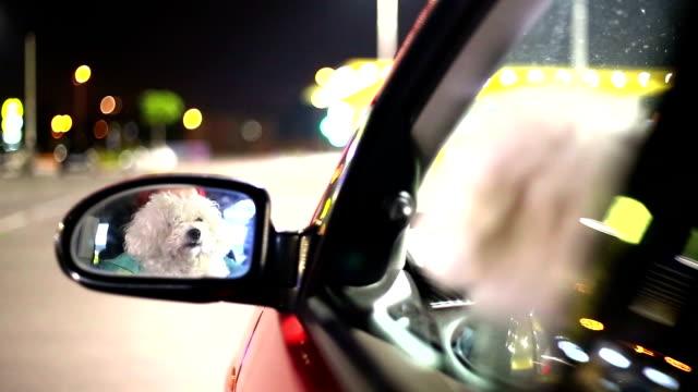 dog in a car looking through window
