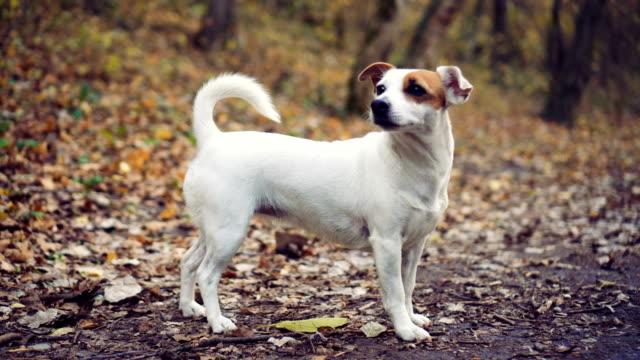 Hund im Herbst Wald – Video