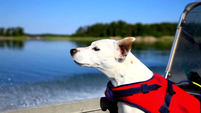 vídeos de stock e filmes b-roll de cão em barco - arquipélago