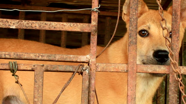 Dog in cage Dog in cage depression land feature stock videos & royalty-free footage