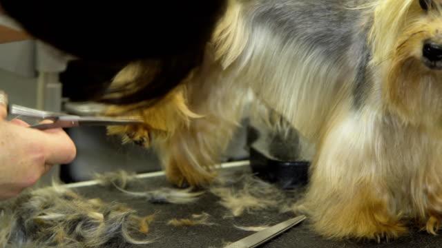 Dog in pet grooming salon video