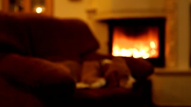 vídeos de stock e filmes b-roll de cão no sofá em casa à noite e fogo na lareira - aconchegante