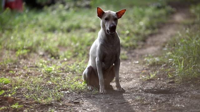 cane in cortile - cane addestrato video stock e b–roll