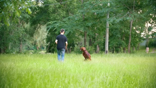 Dog Irish setter running in the park with his owner - man, slow-motion Dog Irish setter running in the park with his owner - man, slow-motion shot irish setter stock videos & royalty-free footage