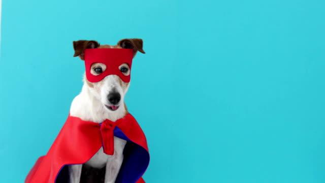 hund jack russell super helden-kostüm - held stock-videos und b-roll-filmmaterial