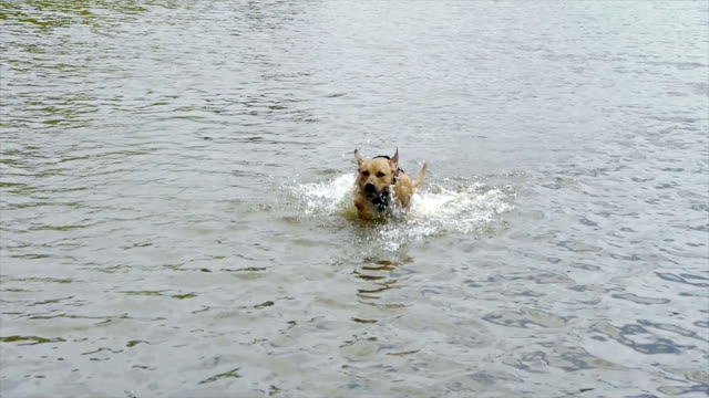 Dog jumping out of the water video