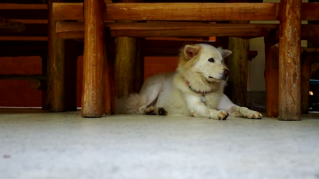 dog laying down under the bench video