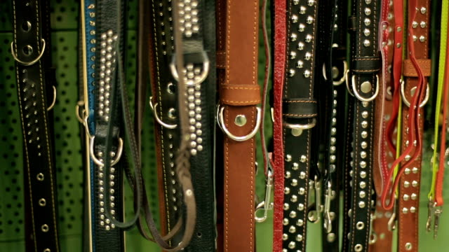 dog leashes in a pet tool market - imbracatura video stock e b–roll