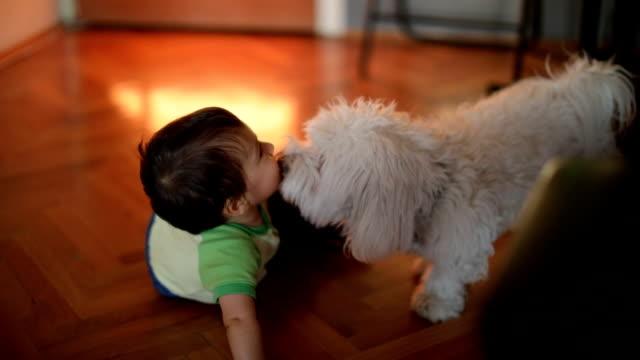 hund leckt kleiner junge - menschlicher kopf stock-videos und b-roll-filmmaterial