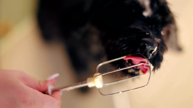 Dog licking pate from electric mixer wire video