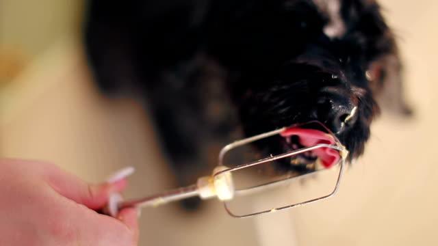 Patê de cachorro lambendo de fio misturador elétrico - vídeo