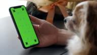 istock Dog looking smartphone green screen 1256899164