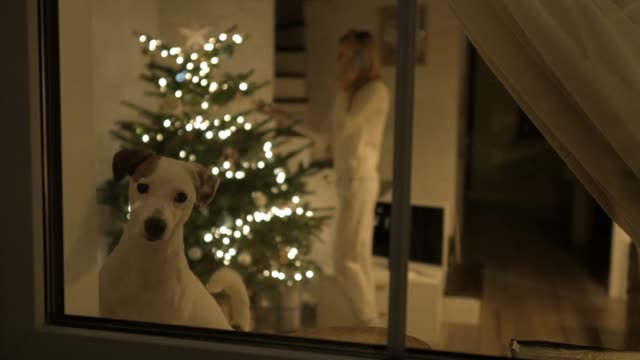 dog looks out the window at christmas - christmas background стоковые видео и кадры b-roll