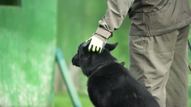dog love - cane addestrato video stock e b–roll