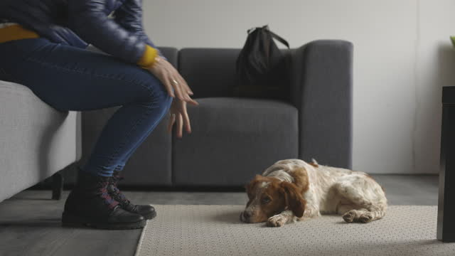 Dog lying on carpet in living room while woman sitting and putting on shoes