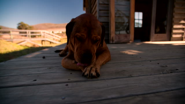 Dog lying on front porch Dog lying on front porch paw stock videos & royalty-free footage